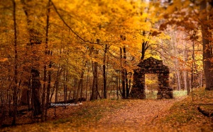 Forest Doorway In Fall
