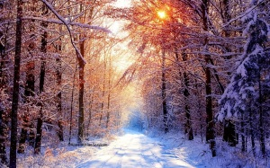 Roadway In Snow